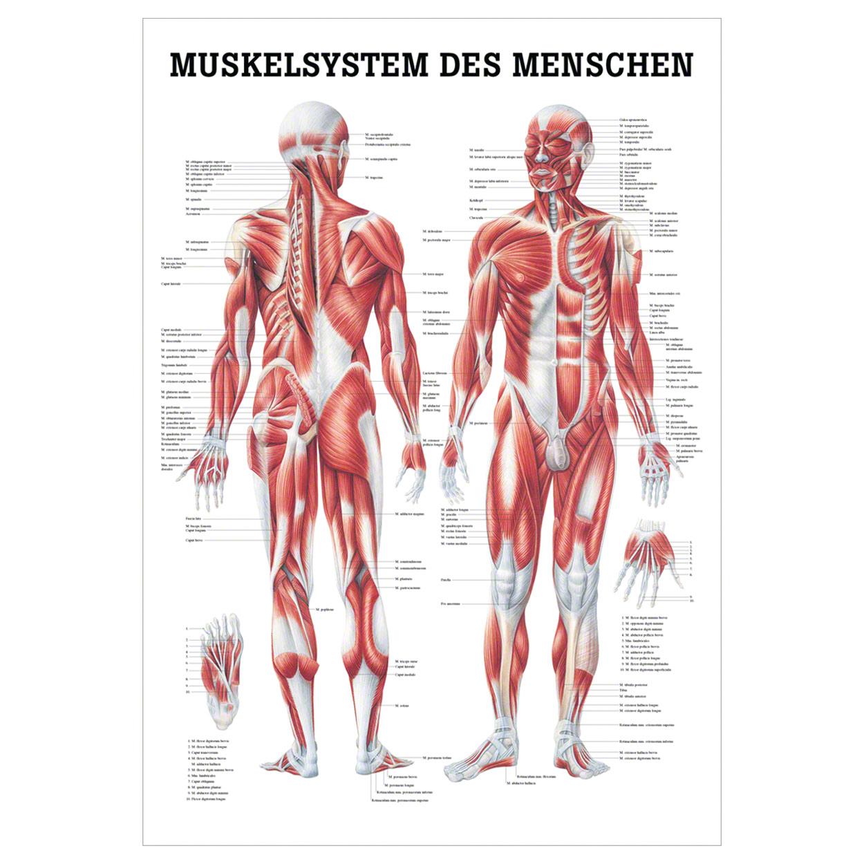 Fantastisch Menschliche Nervensystem Anatomie Fotos - Menschliche ...