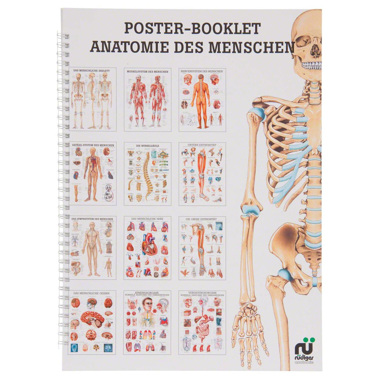 Mini-Poster Booklet Anatomie des Menschen, LxB 34x24 cm, 12 Poster ...