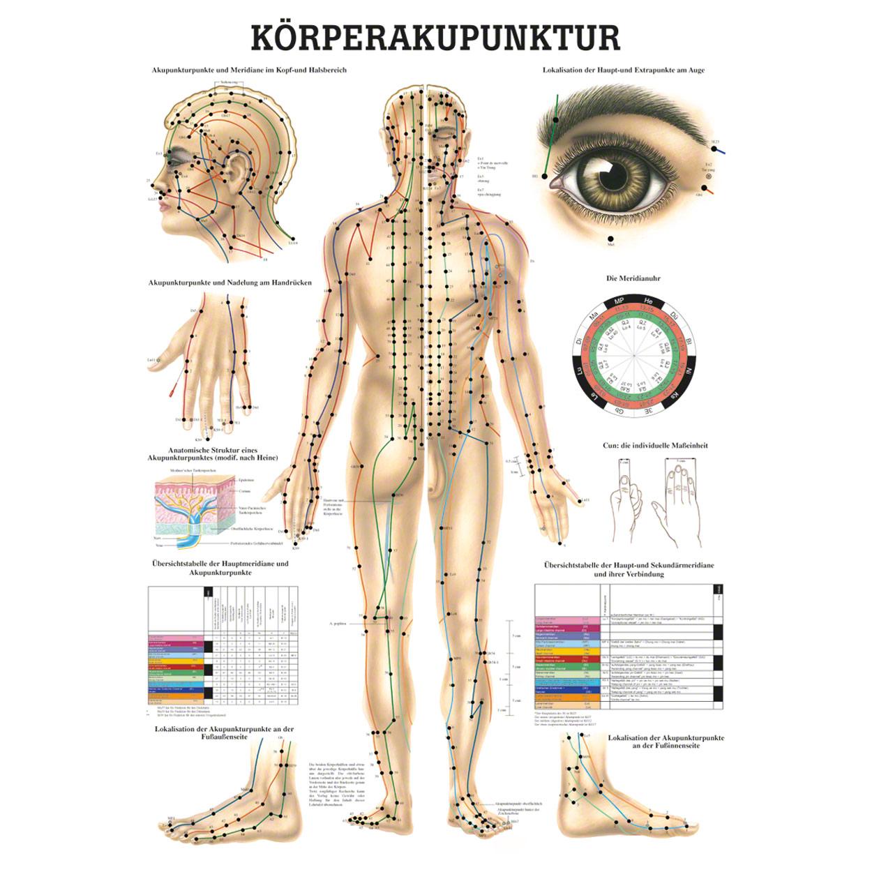 Schön Kühle Anatomie Poster Bilder - Anatomie Ideen - finotti.info