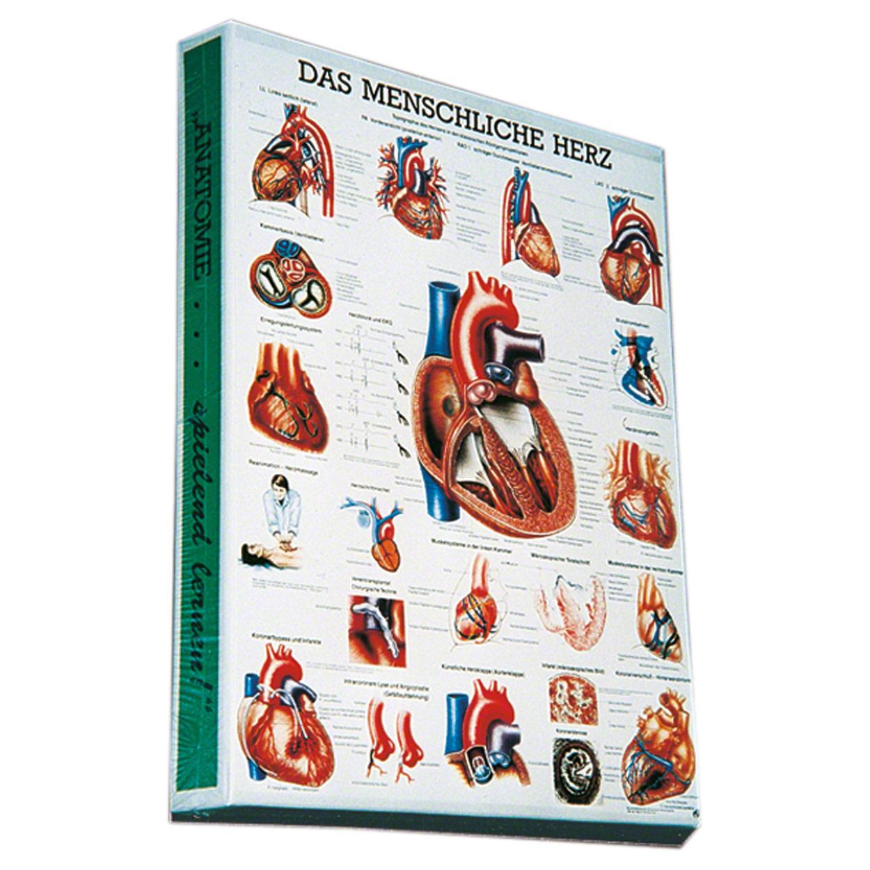 Puzzle Herz, 50x37 cm, 500 Teile - Sport-Tec.de: Anatomische Puzzle Shop