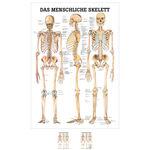 """Skelett Modell - Lehrtafel """"Das menschliche Skelett"""", LxB 100x70 cm"""