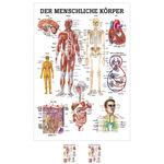 """Lehrtafeln - Lehrtafel """"Der menschliche Körper"""", LxB 100x70 cm"""