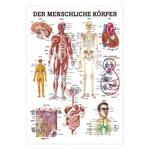 """anatomische Poster - Mini-Poster """"Der menschliche Körper"""", LxB 34x24 cm"""