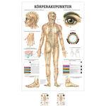 """Lehrtafeln - Lehrtafel """"Körperakupunktur"""", LxB 100x70 cm"""