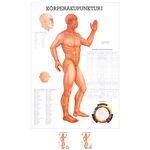 """Lehrtafeln - Lehrtafel """"Körperakupunktur I"""" LxB 100x70 cm"""