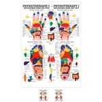 """anatomische Poster - Poster """"Reflexzonen"""", LxB 70x50 cm"""