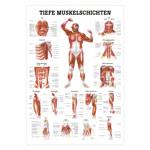 "anatomische Poster - Mini-Poster ""Tiefe Muskelschichten-Brust"", LxB 34x24 cm"