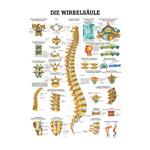 """anatomische Lehrtafeln - Mini-Poster """"Wirbelsäule"""", LxB 34x24 cm"""