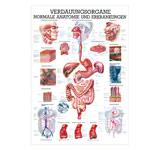 """anatomische Poster - Mini-Poster """"Verdauungsorgane"""", LxB 34x24 cm"""
