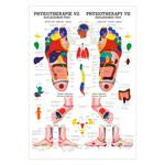 "anatomische Poster - Mini-Poster ""Reflexzonen Fuss"", LxB 34x24 cm"