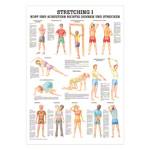 """anatomische Lehrtafeln - Mini-Poster """"Stretching I"""", LxB 34x24 cm"""
