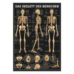 """anatomische Poster - Mini-Poster """"Das Skelett des Menschen"""", LxB 34x24 cm"""