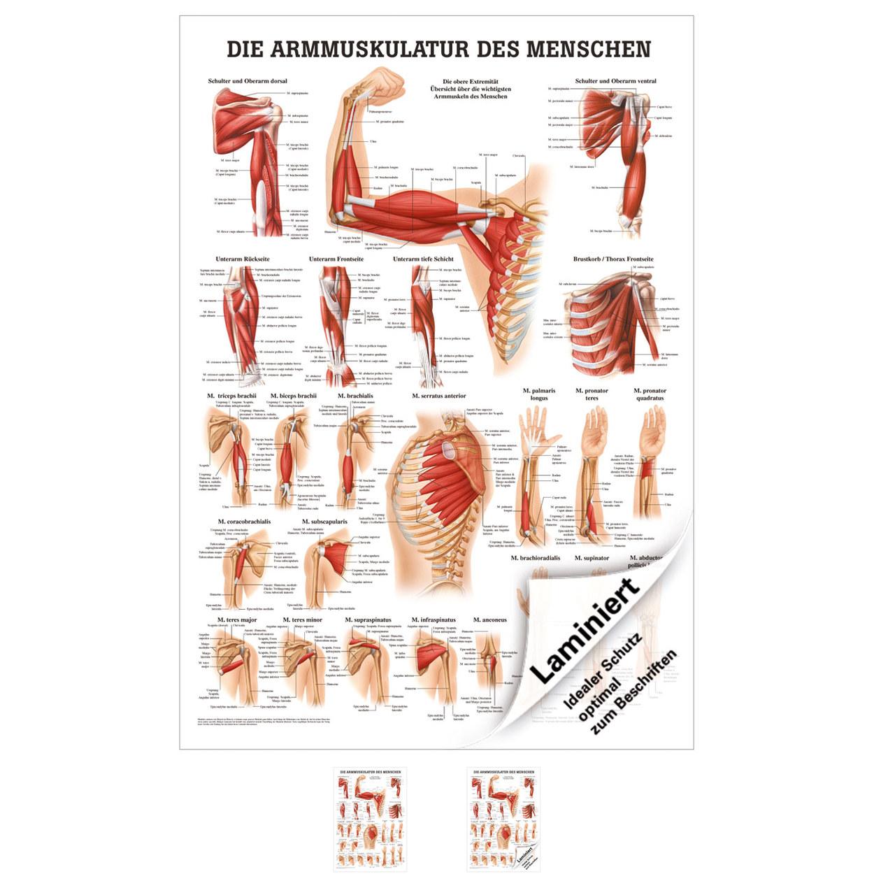 Ausgezeichnet Anatomie Linke Seite Unter Rippen Bilder - Anatomie ...