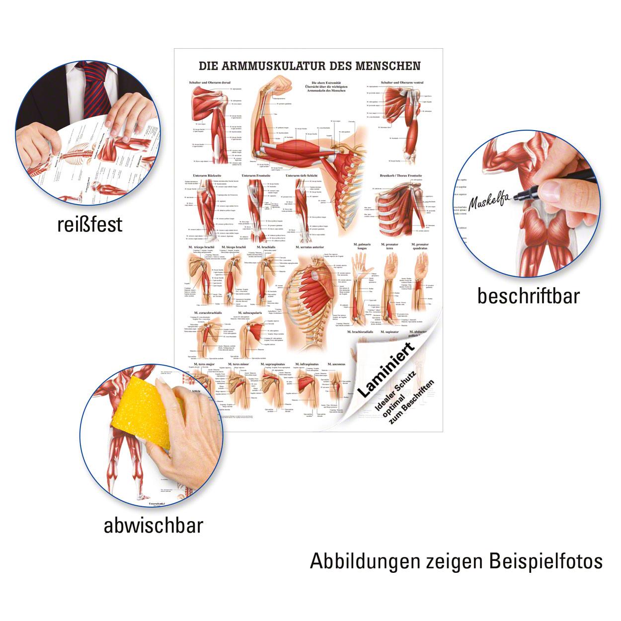 Tolle Riss Der Rotatorenmanschette Anatomie Ideen - Physiologie Von ...