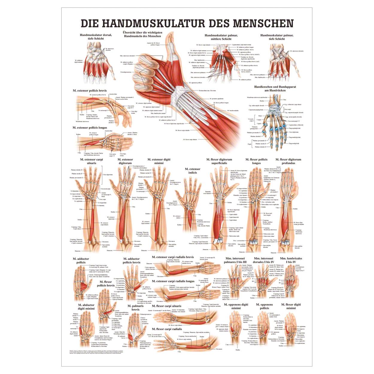 Fantastisch Anatomie Eines Fensters Ideen - Menschliche Anatomie ...