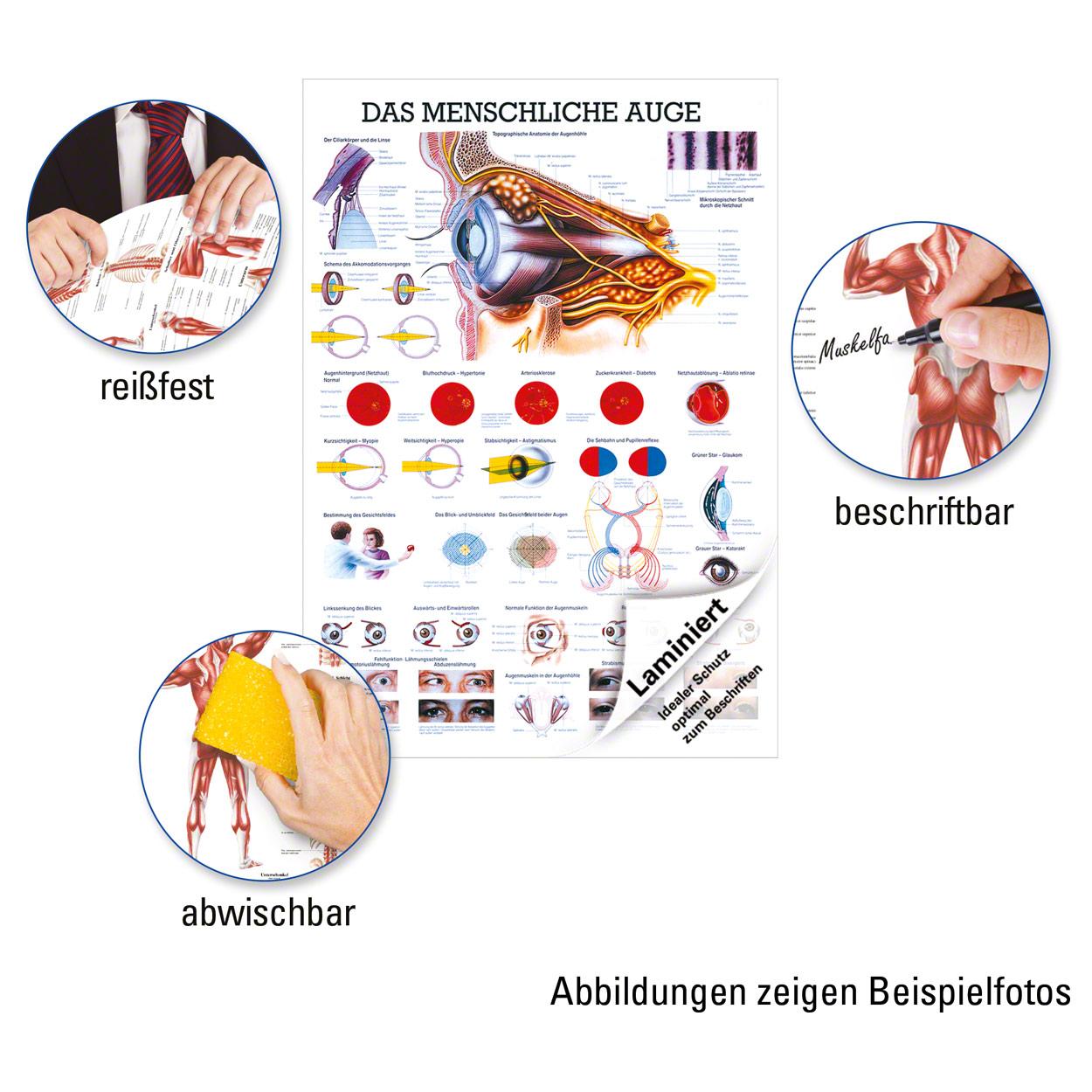 Wunderbar Anatomie Und Physiologie 9. Auflage Laborhandbuch Bilder ...