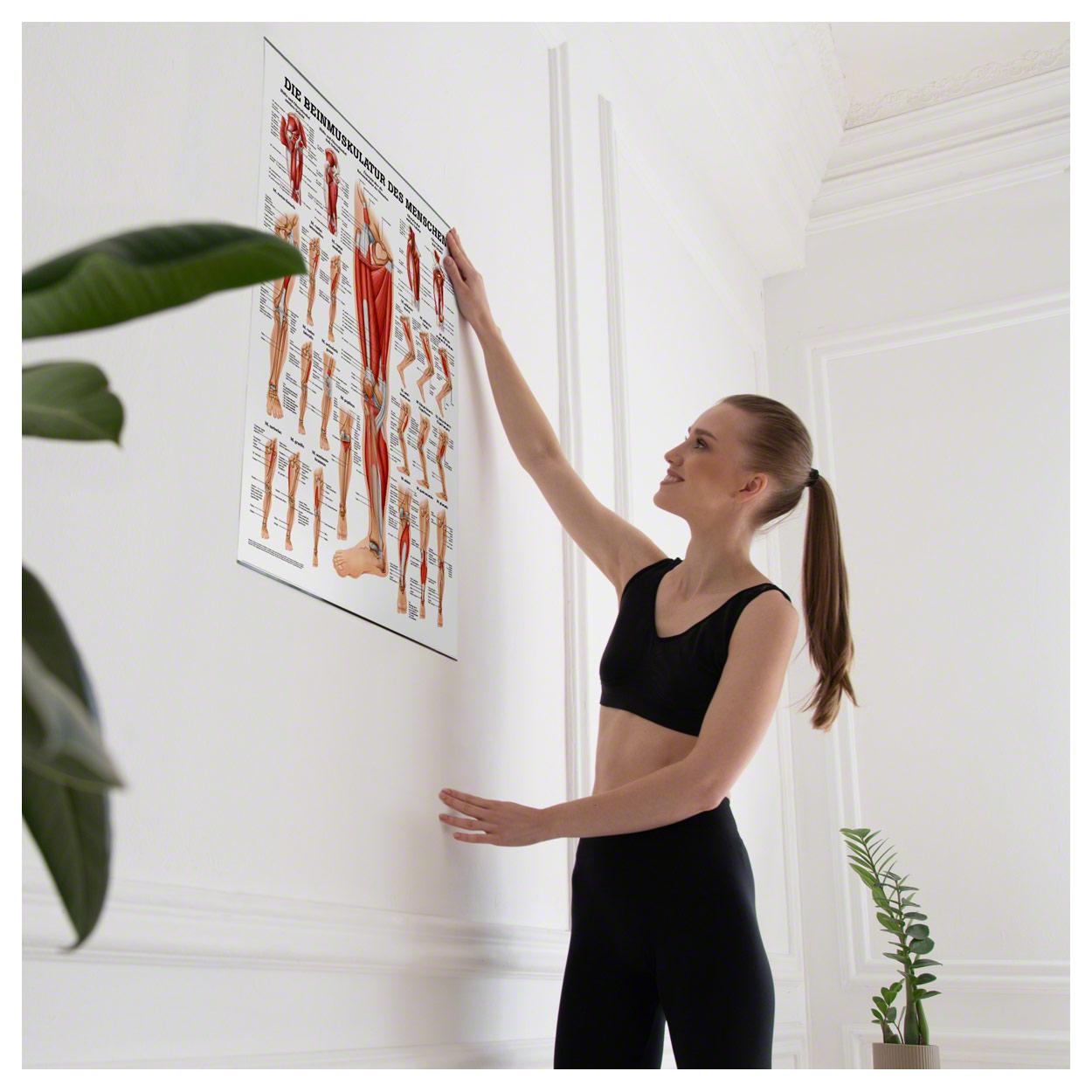 Die Beinmuskulatur Poster Anatomie 70x50 cm medizinische Lehrmittel ...