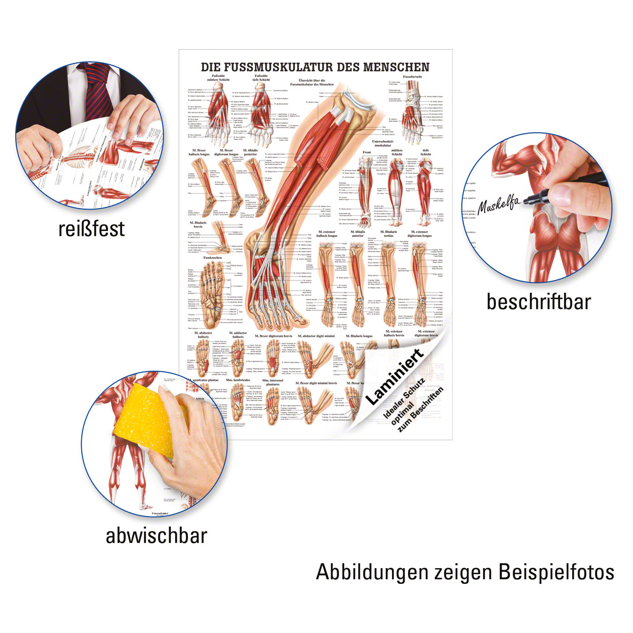 Nett Diagramm Der Muskeln Im Rücken Ideen - Anatomie Von ...