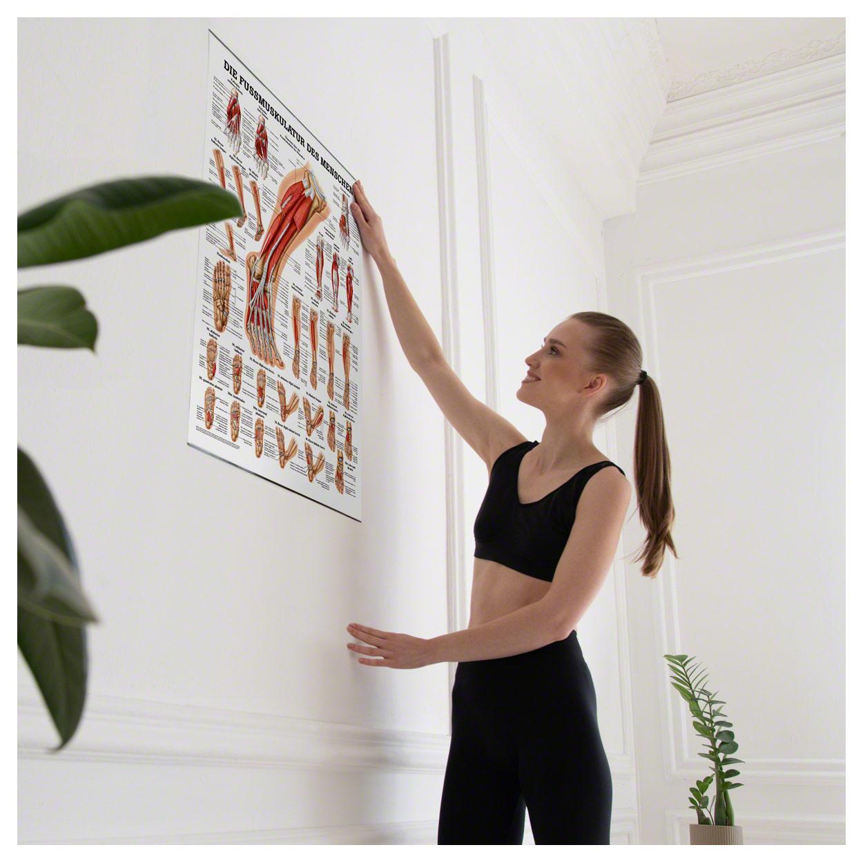 Die Fußmuskulatur Poster Anatomie 70x50 cm medizinische Lehrmittel ...