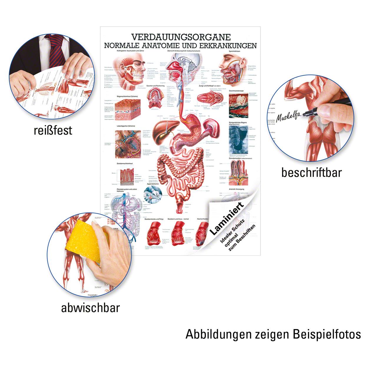 Verdauungsorgane Lehrtafel Anatomie 100x70 cm medizinische ...