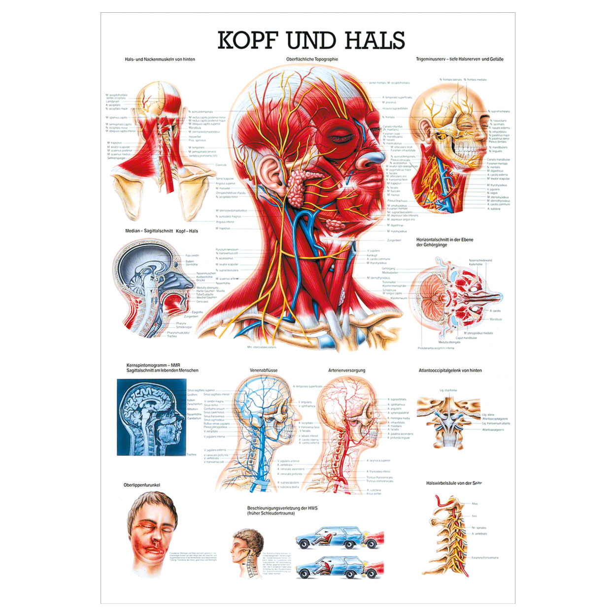 Gemütlich Eine Ebene Anatomie Und Physiologie Ideen - Menschliche ...
