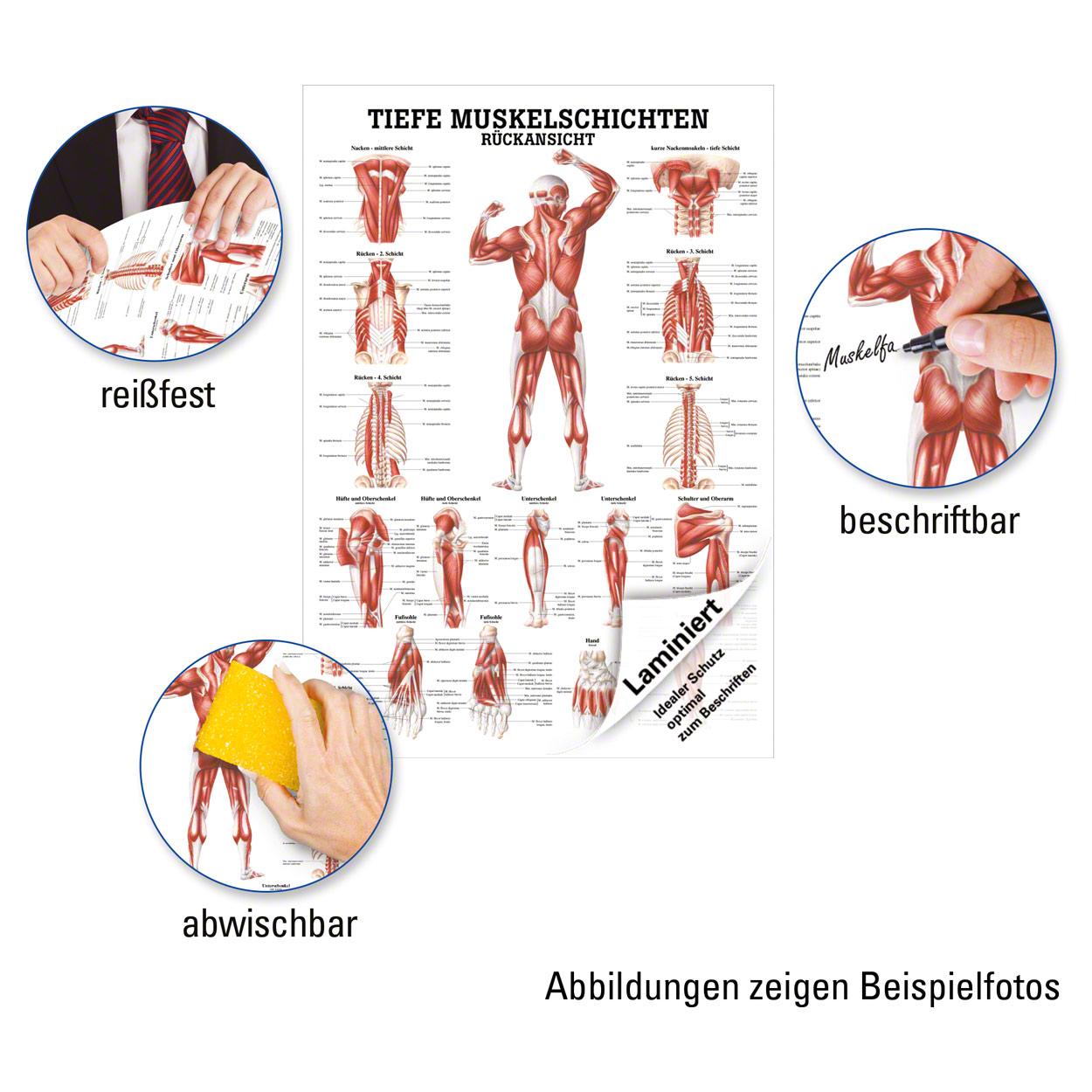 Großartig Anatomie Der Unteren Rückenmuskulatur Zeitgenössisch ...