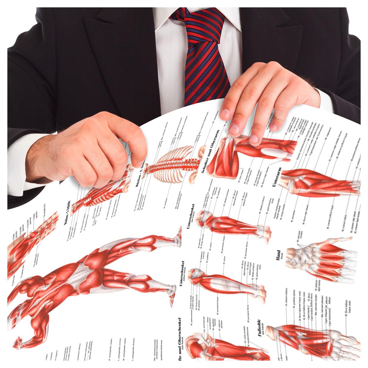 Schulter- und Rückenmuskulatur Mini-Poster Anatomie 34x24 cm med ...