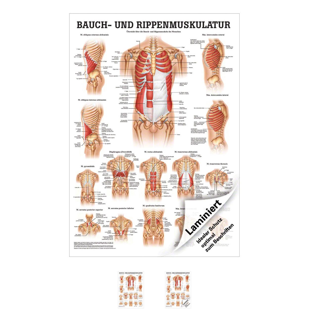 Ungewöhnlich Weibliche Anatomie Organe Galerie - Physiologie Von ...