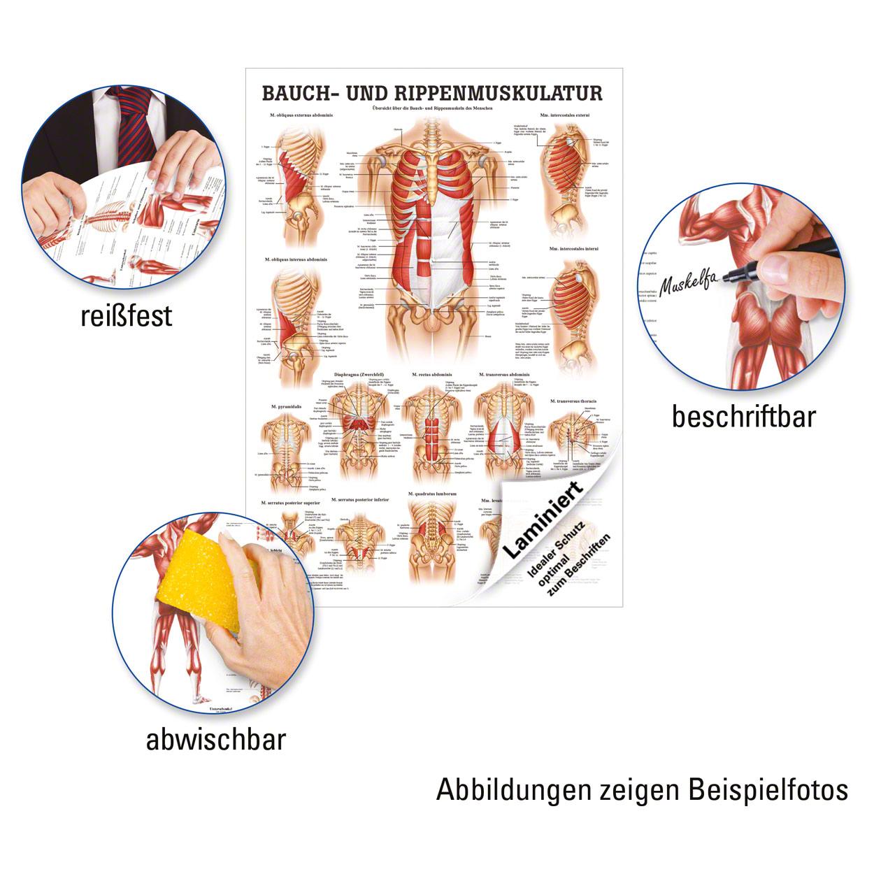 Berühmt Kiefernerv Anatomie Zeitgenössisch - Menschliche Anatomie ...