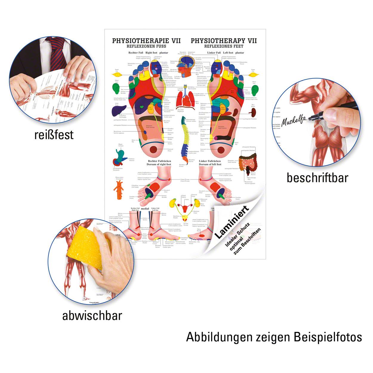 Reflexzonen Fuss Poster Anatomie 70x50 cm medizinische Lehrmittel | eBay
