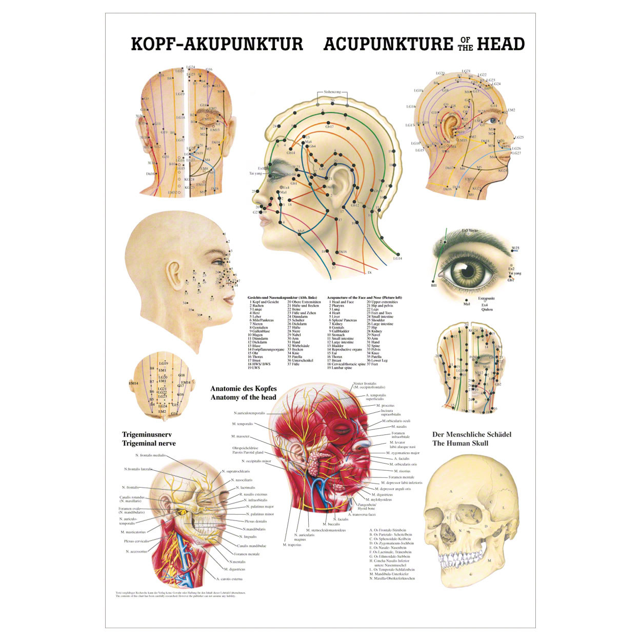 Kopf-Akupunktur Poster Anatomie 70x50 cm medizinische Lehrmittel | eBay