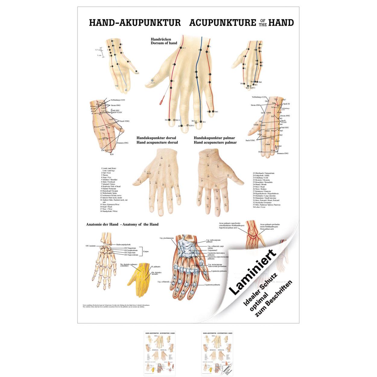 Hand-Akupunktur Poster Anatomie 70x50 cm medizinische Lehrmittel | eBay