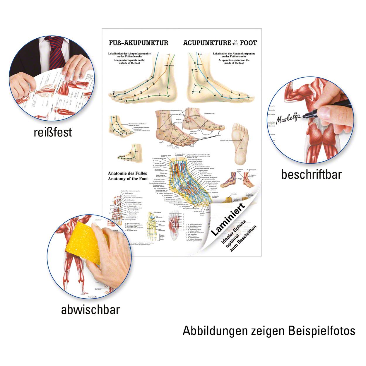 Niedlich Weibliche Menschliches Körperbild Organe Fotos ...