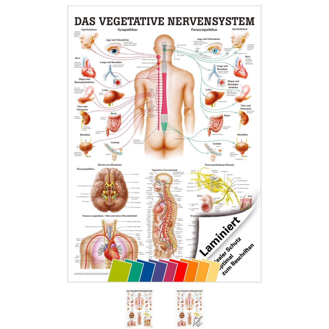 Großzügig Harnblase Anatomie Bilder - Menschliche Anatomie Bilder ...