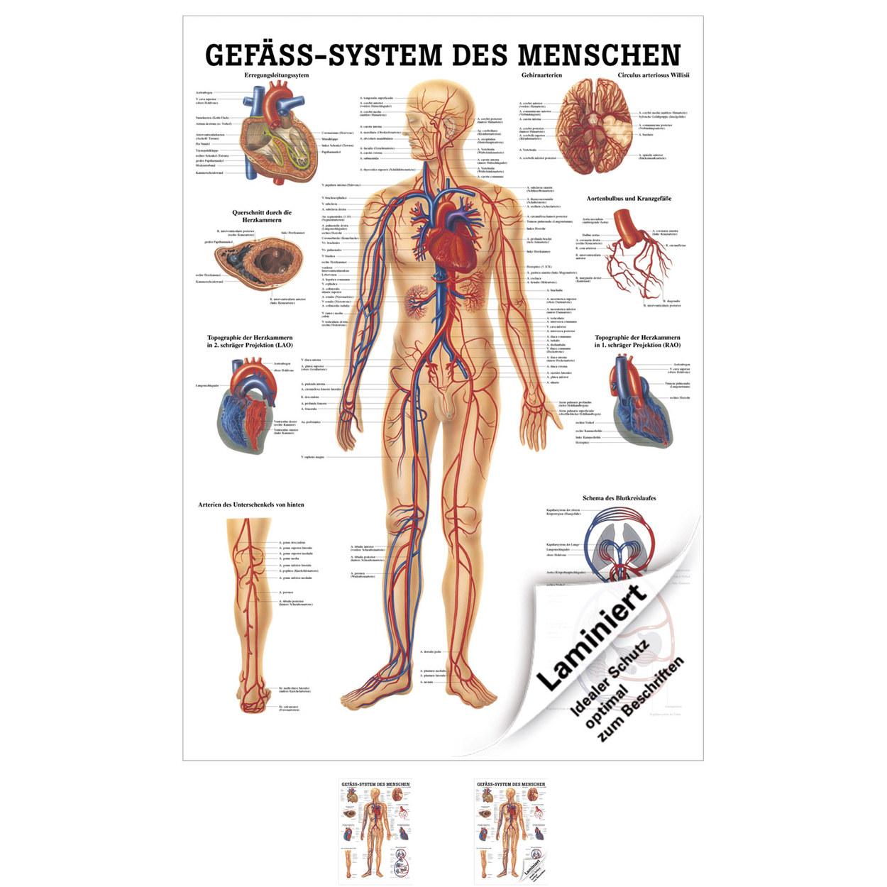 Niedlich Anatomie Des Oberschenkelhalses Galerie - Anatomie Ideen ...