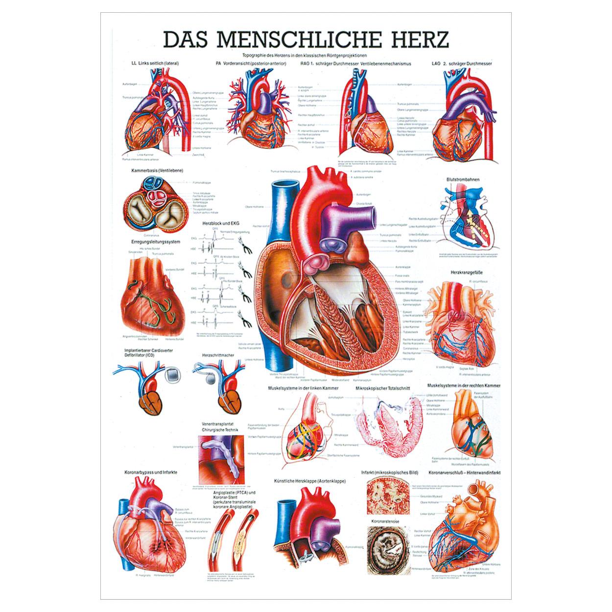 Wunderbar Gunstream Anatomie Und Physiologie Studie Führer Antworten ...