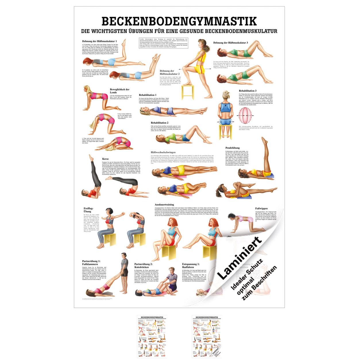 Beckenbodengymnastik Mini-Poster Anatomie 34x24 cm medizinische ...