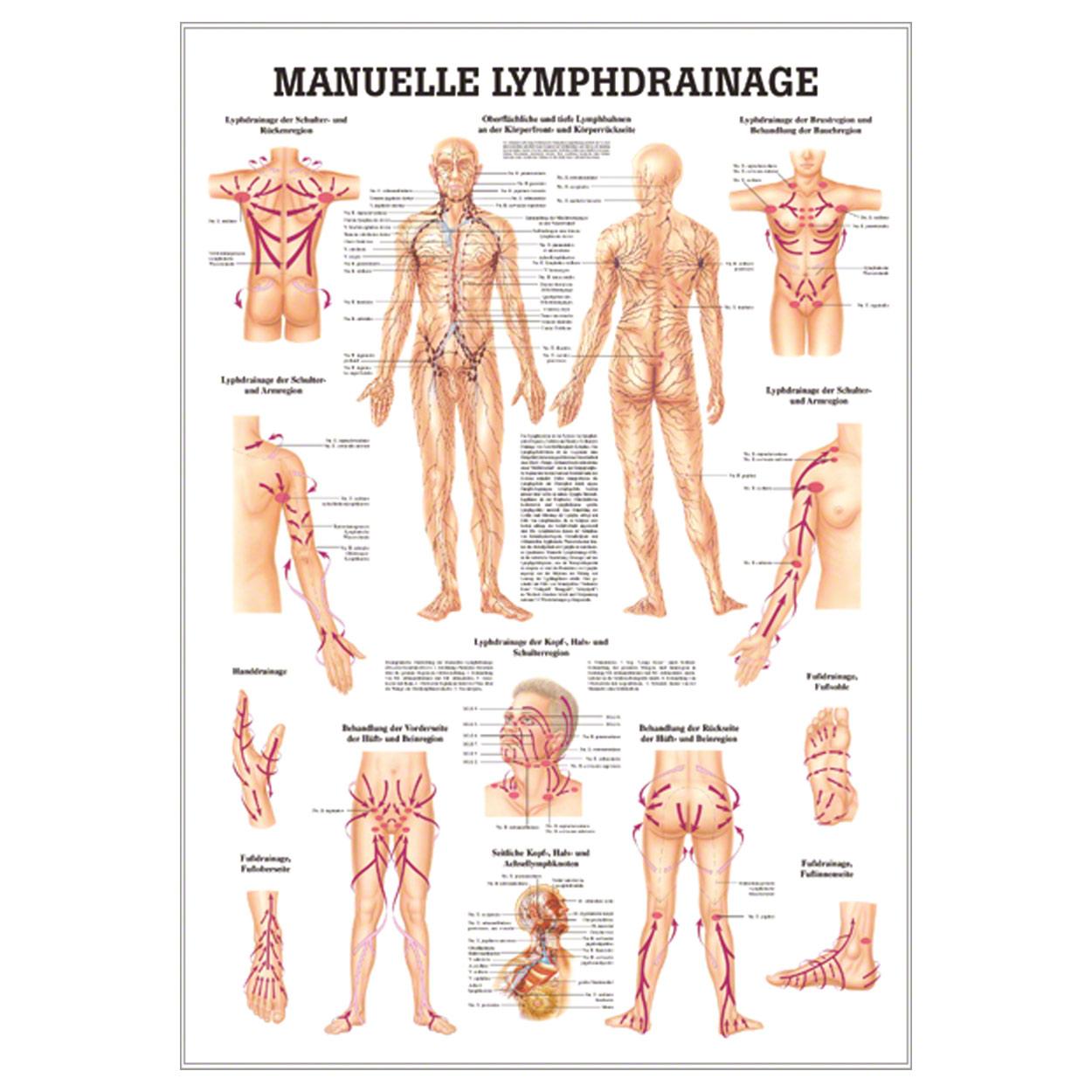 Gemütlich Fingerstruktur Anatomie Galerie - Anatomie Ideen - finotti ...