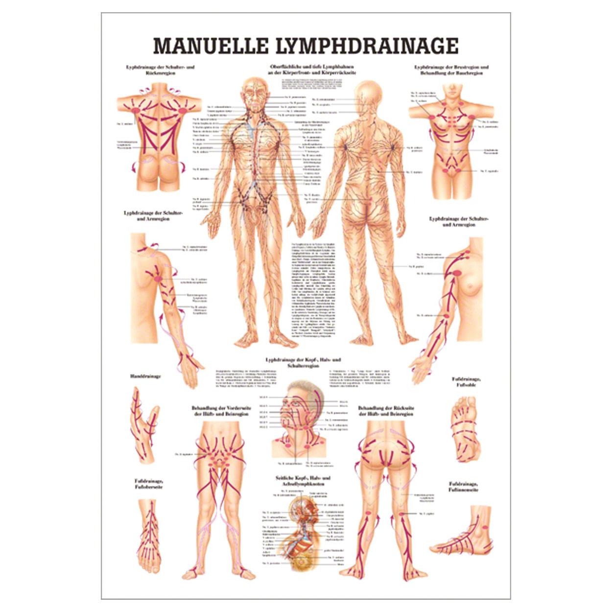 Manuelle Lymphdrainage Mini-Poster Anatomie 34x24 cm medizinische ...