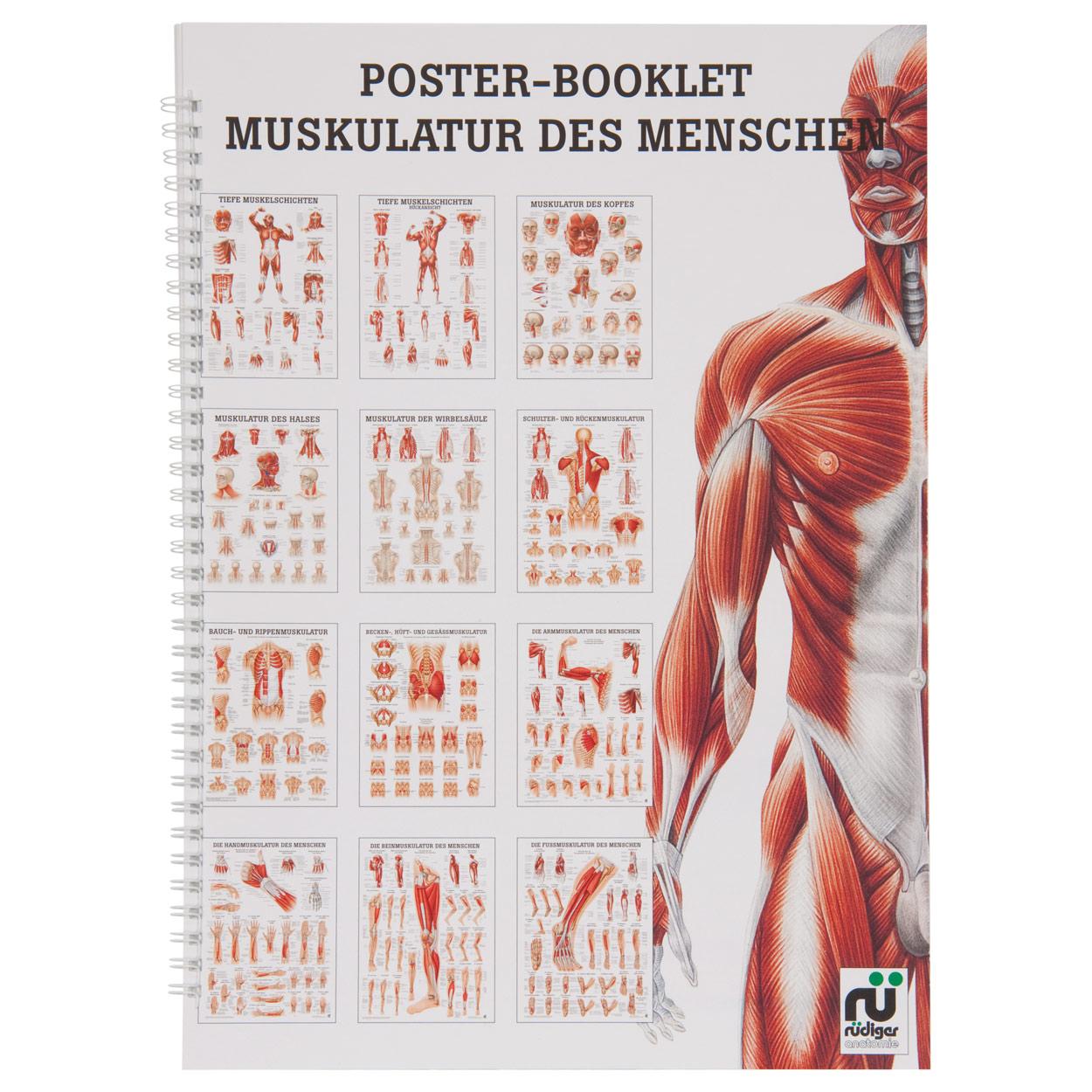 Muskulatur des Menschen Mini-Poster Booklet Anatomie 34x24 cm, 12 ...