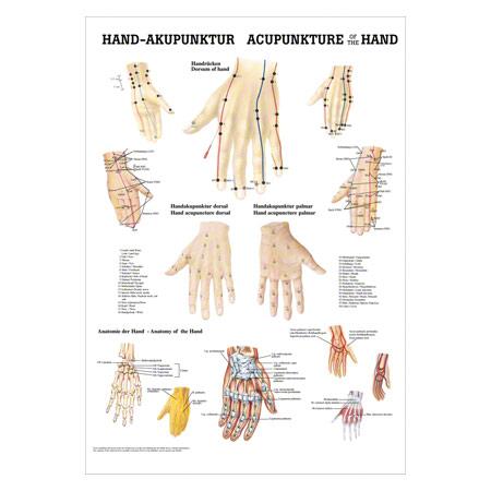 "Poster ""Hand-Akupunktur"", LxB 70x50 cm 25116"