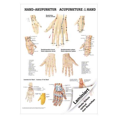 """Mini-Poster """"Hand-Akupunktur"""", LxB 34x24 cm 25155"""