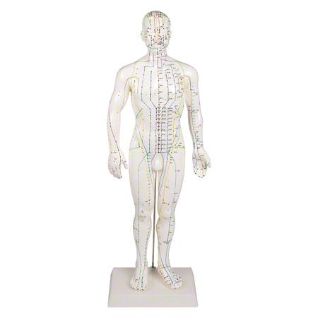 Akupunkturfigur männlich, 45 cm 25182