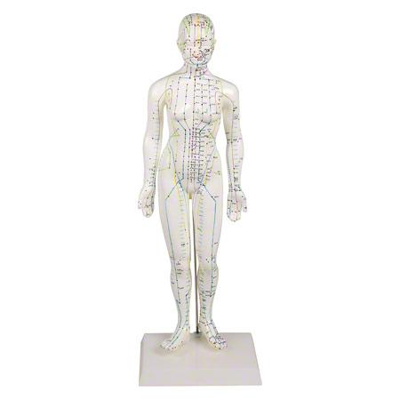 Akupunkturfigur weiblich, 45 cm 25183