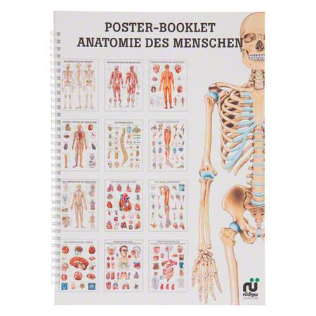 Gemeinsame Mini-Poster Booklet Anatomie des Menschen, LxB 34x24 cm, 12 Poster #KO_99